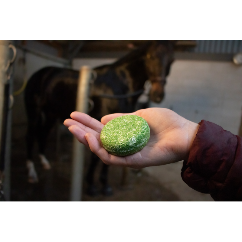 Puppy Kong Small
