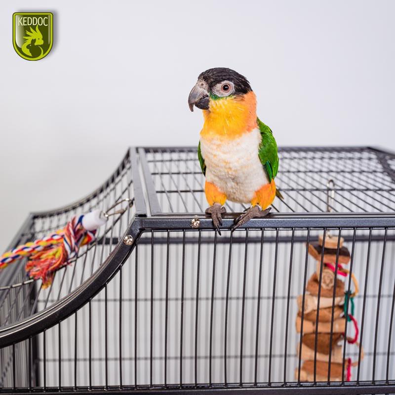 Petsafe Extra Halsband Cat Fence