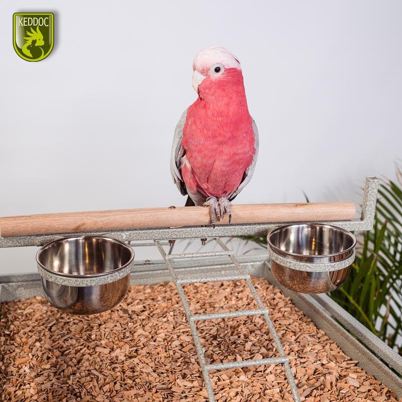 Glasterrarium 50x50x50 standaard