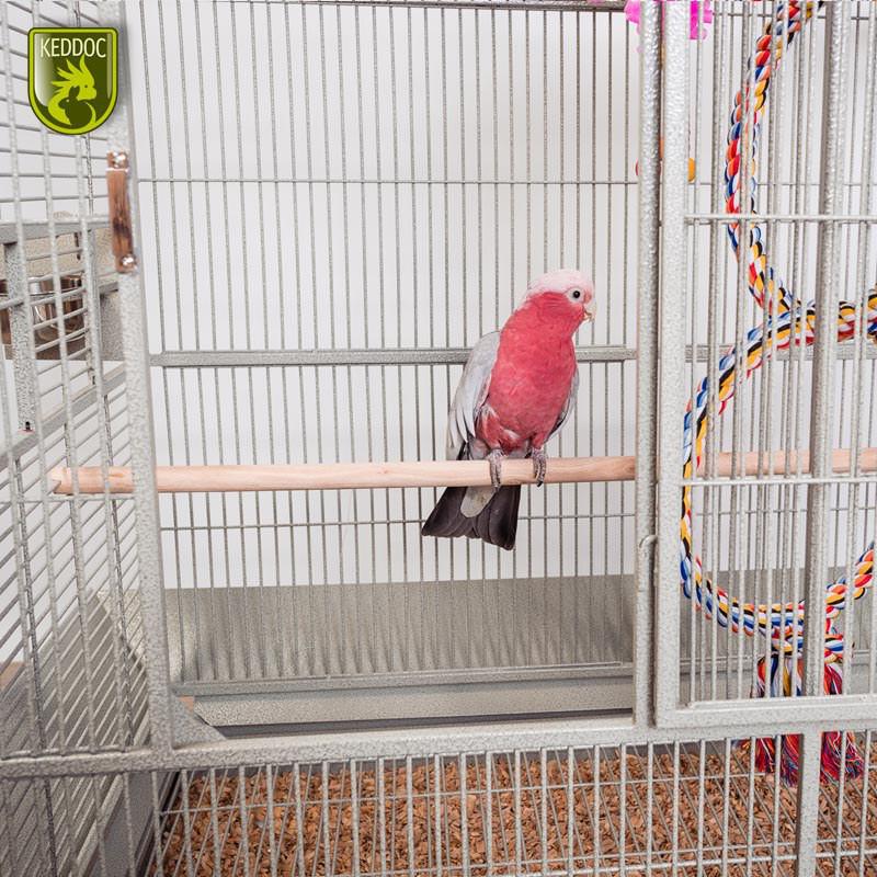 Glasterrarium standaard 30x30x40