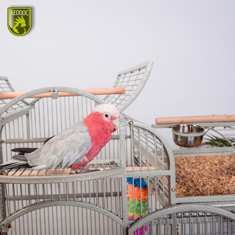 Glasterrarium standaard 20x20x30