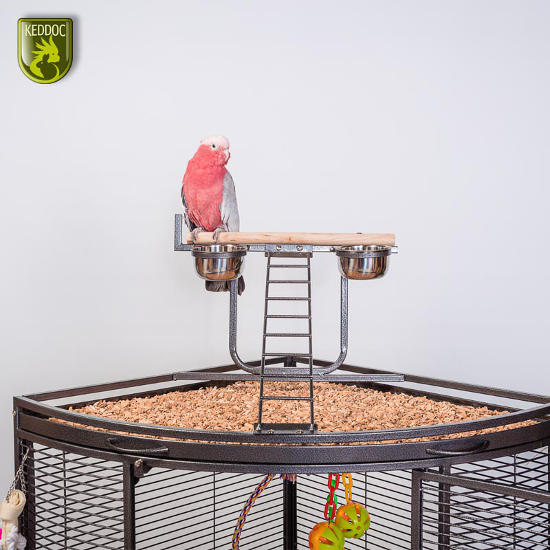 Glasterrarium standaard 20x30x20