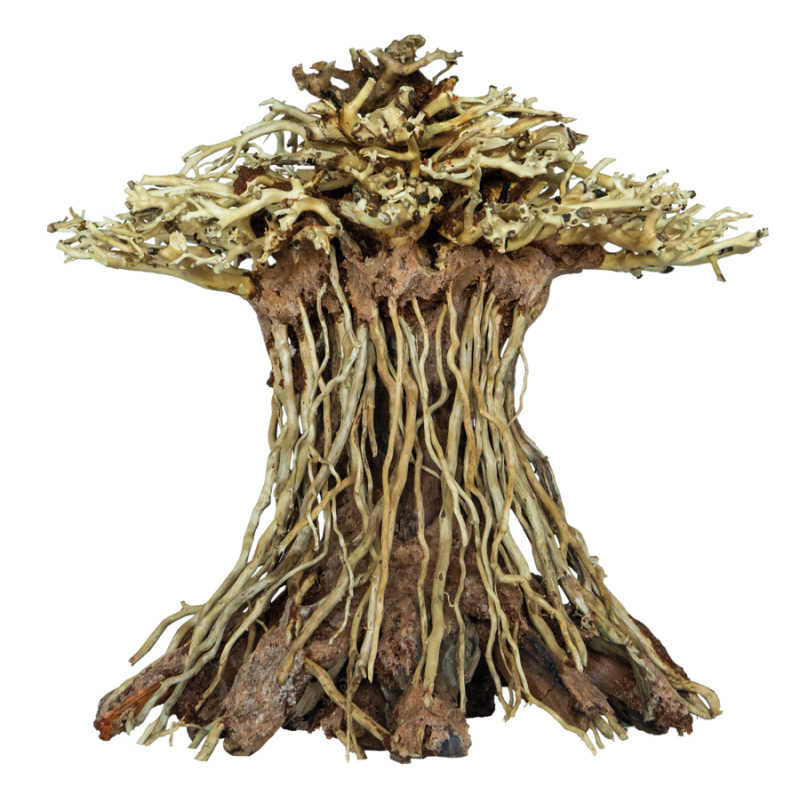Hondensport Flybal