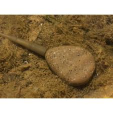 Applaws Chicken & Lamb Adult Brok 2kg
